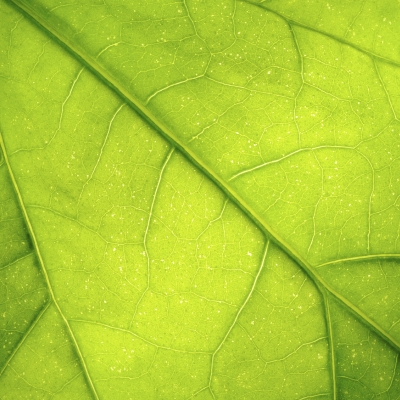 Učinki sevanja na živa bitja