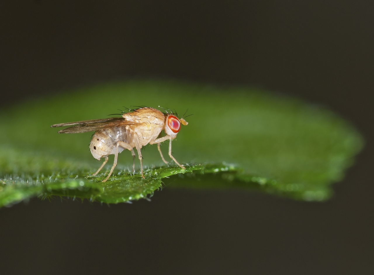 Sterilizacija žuželk